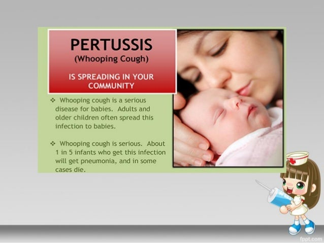 a study of whooping cough or pertussis For health professionals pertussis (whooping cough) is a highly contagious infection of the respiratory tract caused by the bacterium bordetella pertussis.