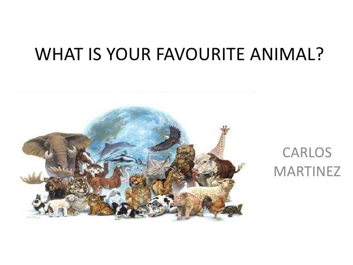 Describe your pet or your favourite animal