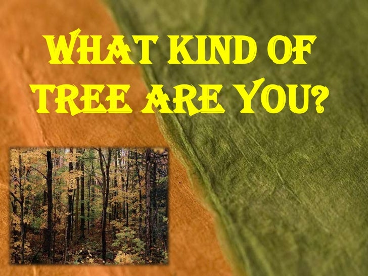What Kind ofTree Are You?