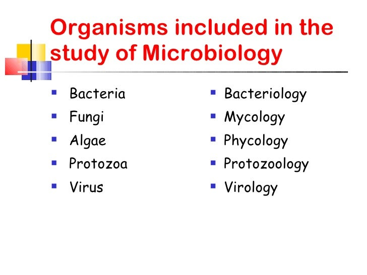 Study Microbiology in the USA