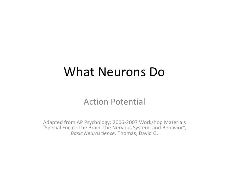 """What Neurons Do<br />Action Potential<br />Adapted from AP Psychology: 2006-2007 Workshop Materials """"Special Focus: The Br..."""