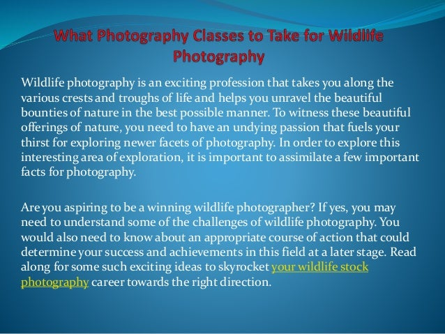 Wildlife photography is an exciting profession that takes you along the various crests and troughs of life and helps you u...