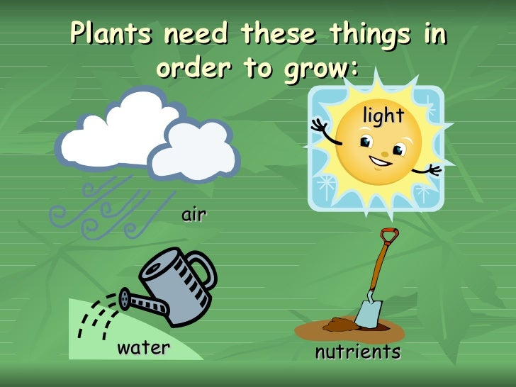 What plants need?