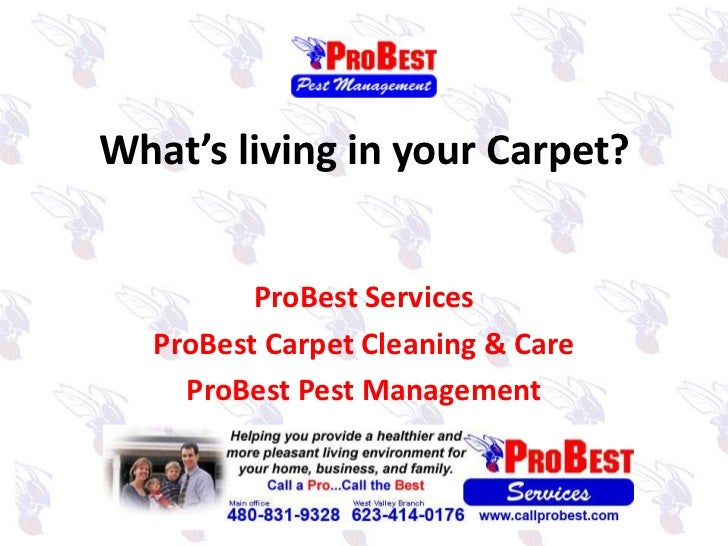 What's living in your Carpet?<br />ProBest Services<br />ProBest Carpet Cleaning & Care<br />ProBest Pest Management<br />
