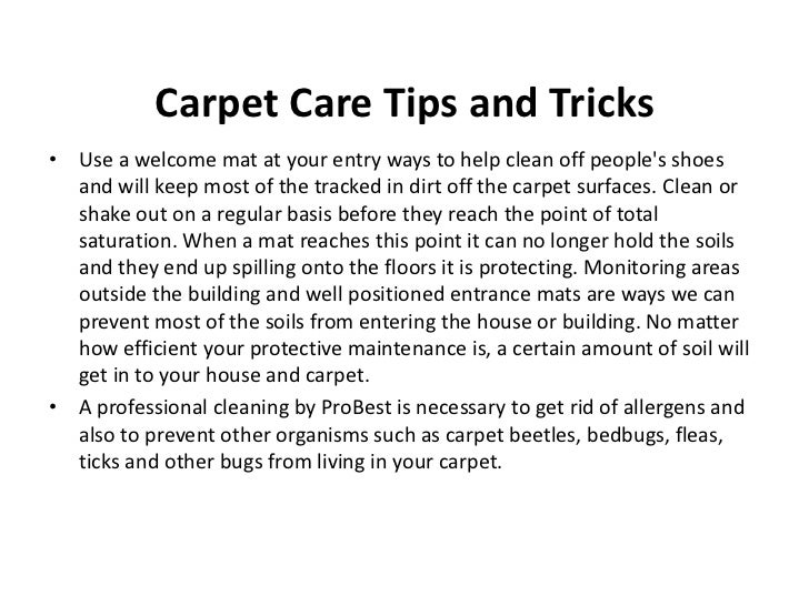 What S Living In Your Carpet
