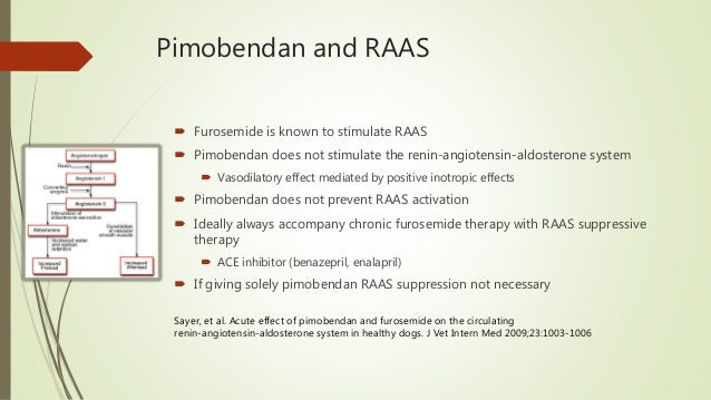 What S New With Pimobendan Current Research And Treatment