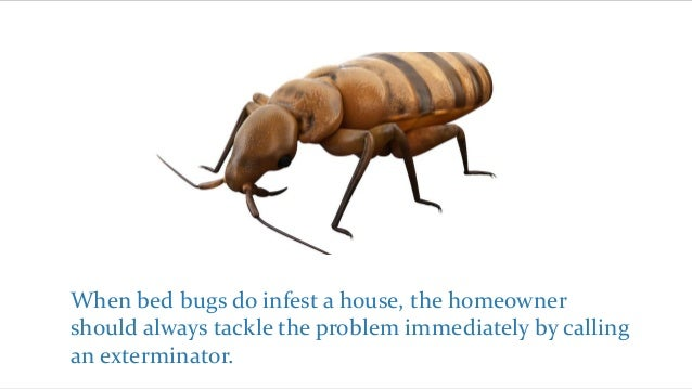 Procedures Of Exterminating Bed Bugs