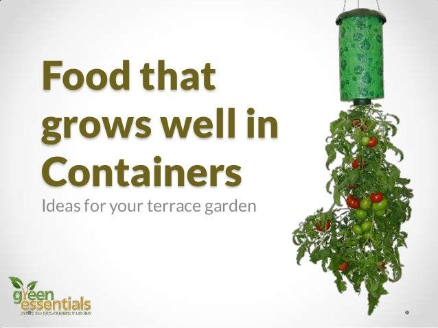 Food that grows well in Containers Ideas for your terrace garden