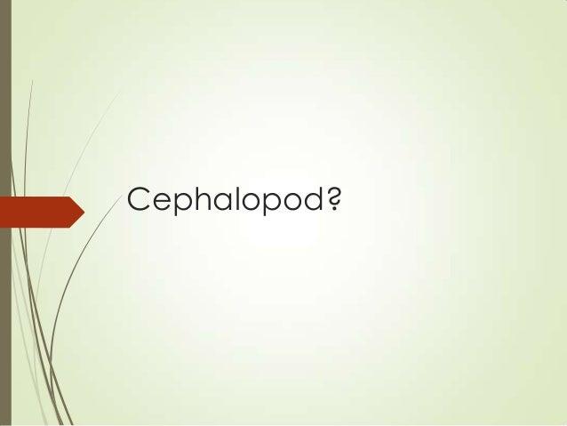 Cephalopod?