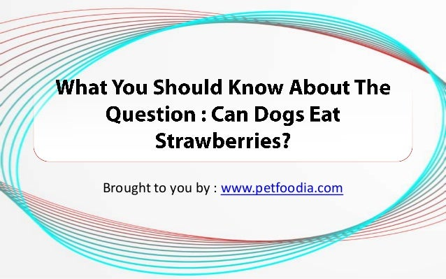 Can You Give Dogs Strawberries