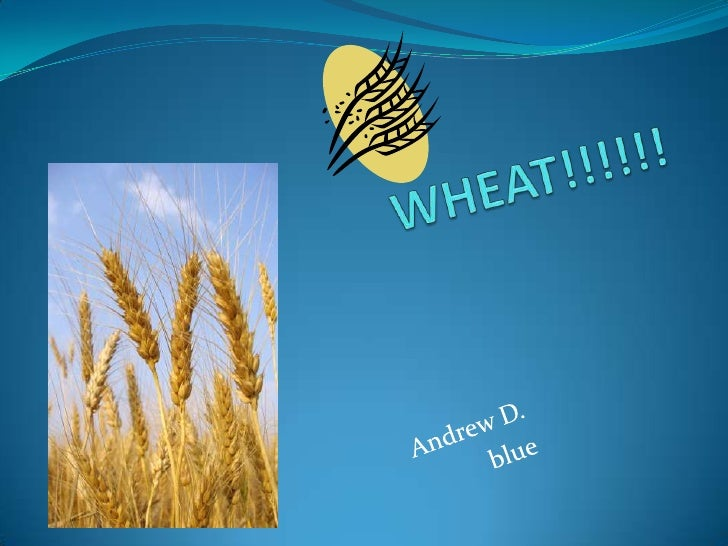WHEAT!!!!!!<br />Andrew D.<br />blue<br />