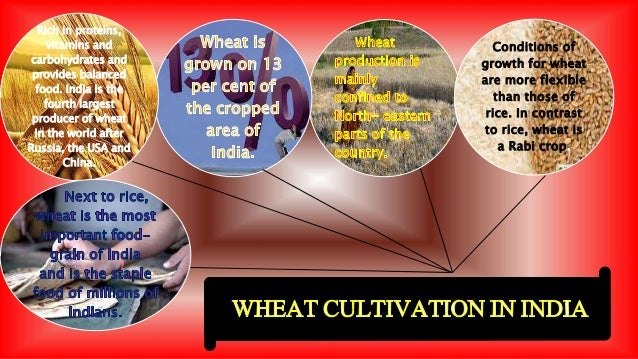 Wheat cultivation in punjab case study project fa