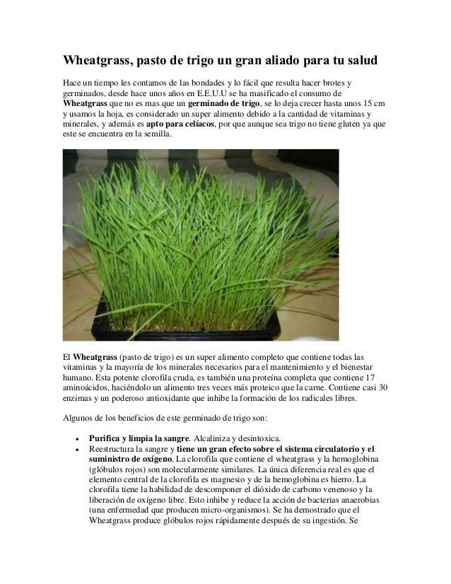 Wheatgrass, pasto de trigo un gran aliado para tu salud Hace un tiempo les contamos de las bondades y lo fácil que resulta...