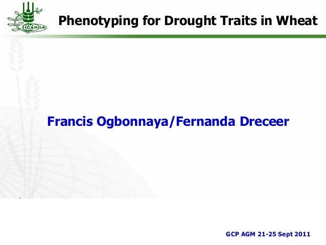 Phenotyping for Drought Traits in WheatFrancis Ogbonnaya/Fernanda DreceerGCP AGM 21-25 Sept 2011