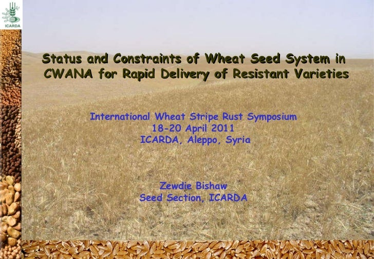 Status and Constraints of Wheat Seed System in CWANA for Rapid Delivery of Resistant Varieties International Wheat Stripe ...