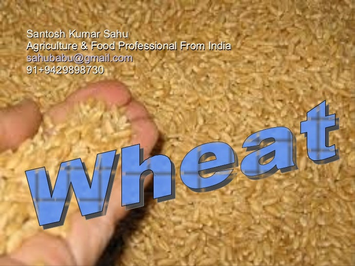 Santosh Kumar Sahu  Agriculture & Food Professional From India [email_address] 91+9429898730  Wheat