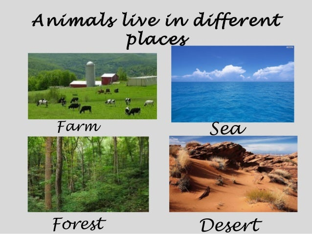 How Animals Live Animals And Their Classification Where do you live?, i live (in/on)…, fish, cow, bear, camel, bat, duck, goat, hippo, sea, farm, forest, desert, cave, lake, mountain, river, city, town, village a fun, lively song which practices asking where animals and people live. google sites