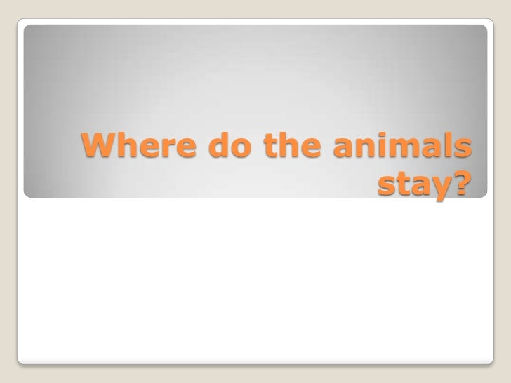 Where do the animals               stay?