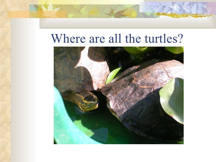 Where are all the turtles?