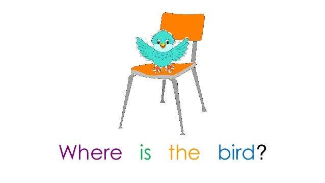 where is the bird