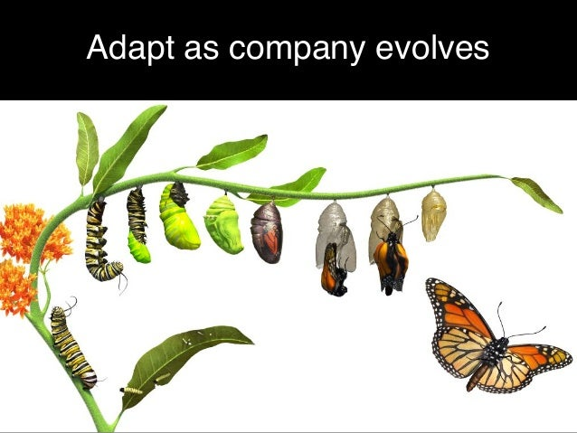 Adapt as company evolves