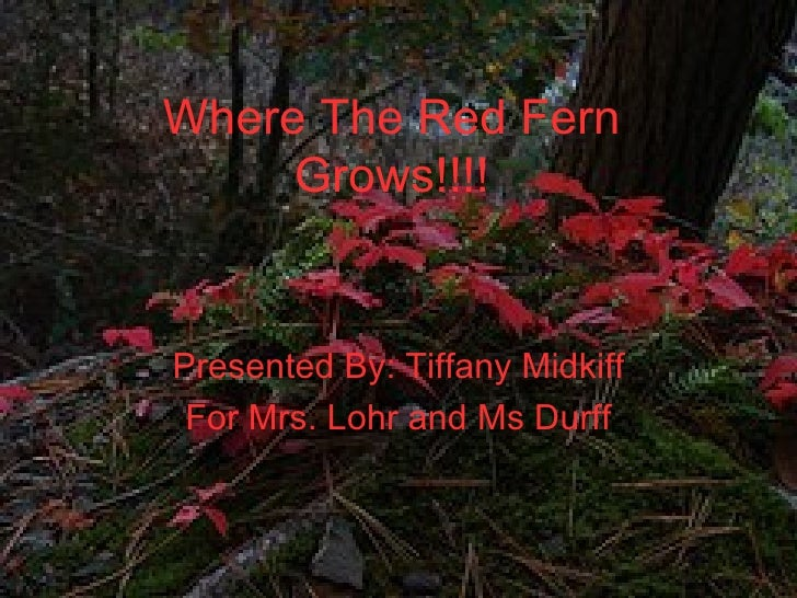 Where The Red Fern Grows!!!! Presented By: tigergirl For Mrs. Lohr and Mrs. Durff