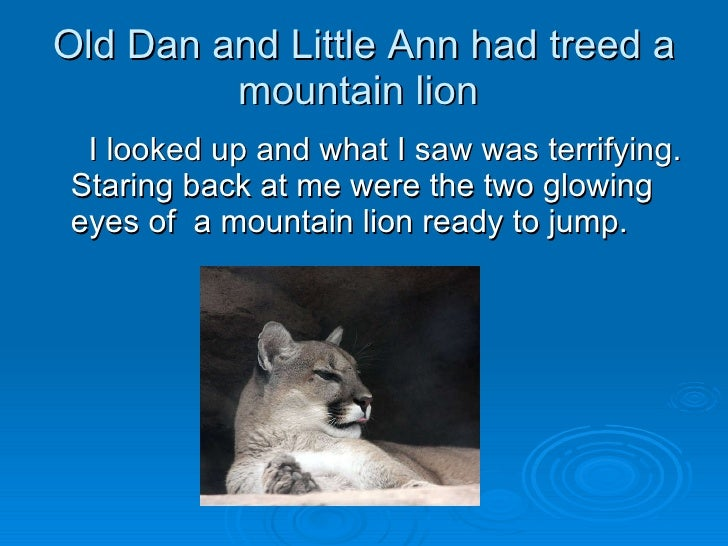 an analysis of old dan and little ann in where the red fern grows Where the red fern grows by fgosal where the red fern grows tells about a man  poetic analysis of fern hill  old dan had the brawn, little ann had the.