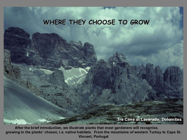 WHERE THEY CHOOSE TO GROW WHERE THEY CHOOSE TO GROW Tre Cime di Laverado, Dolomites After the brief introduction, we illus...