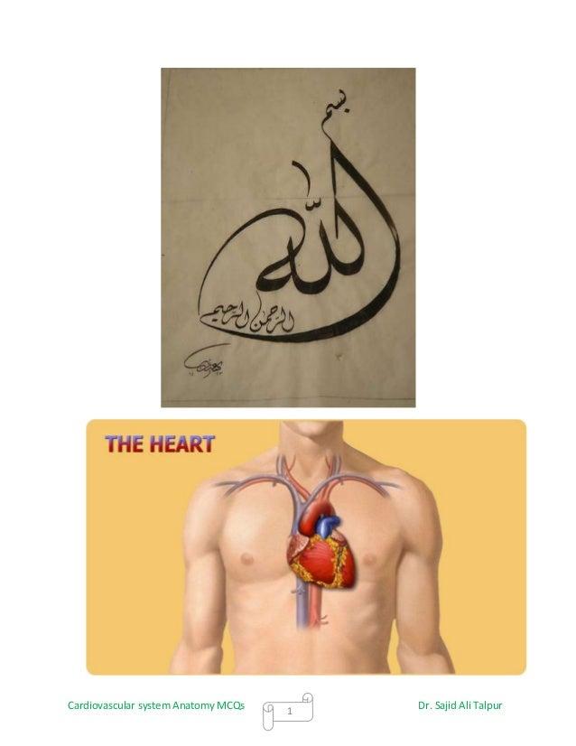 Cardiovascular system Anatomy MCQs   1                                         Dr. Sajid Ali Talpur