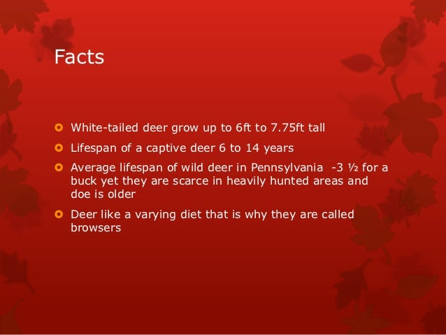 Facts White-tailed deer grow up to 6ft to 7.75ft tall Lifespan of a captive deer 6 to 14 years Average lifespan of wild...