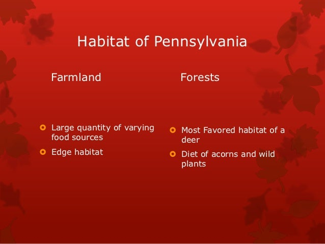 Habitat of Pennsylvania  Farmland                      Forests Large quantity of varying    Most Favored habitat of a  f...