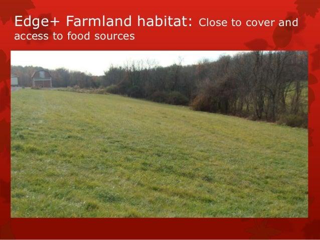Edge+ Farmland habitat:   Close to cover andaccess to food sources