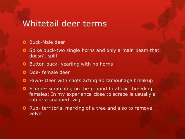 Whitetail deer terms Buck-Male deer Spike buck-two single horns and only a main beam that  doesn't split Button buck- y...