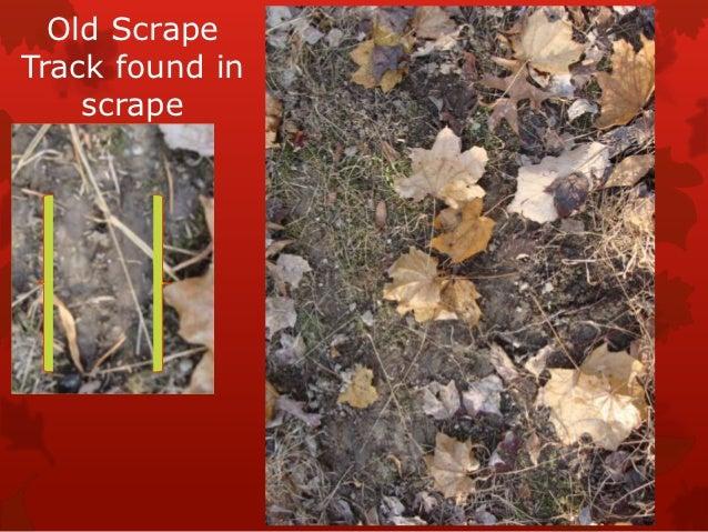 Old ScrapeTrack found in    scrape