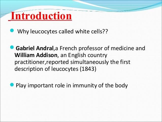 White blood cells  Slide 3