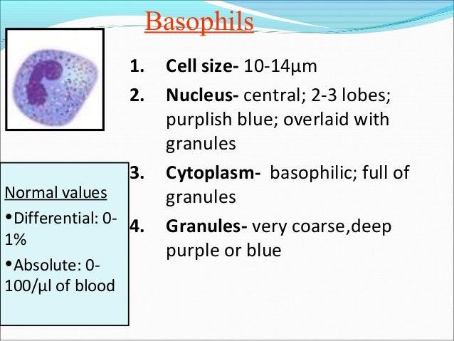 White blood cells