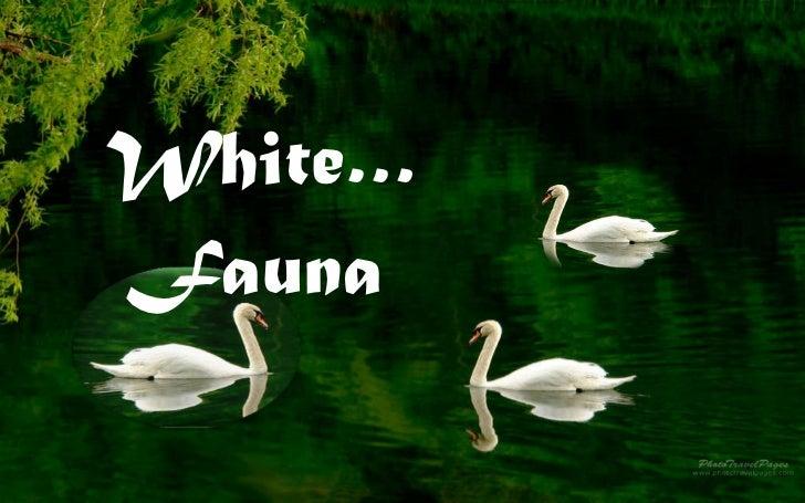 White…  Fauna