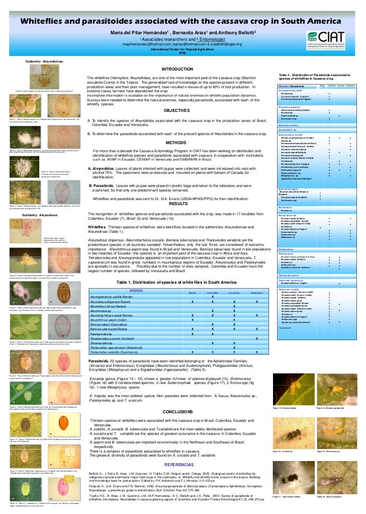 Whiteflies and parasitoides associated with the cassava crop in South America                                             ...