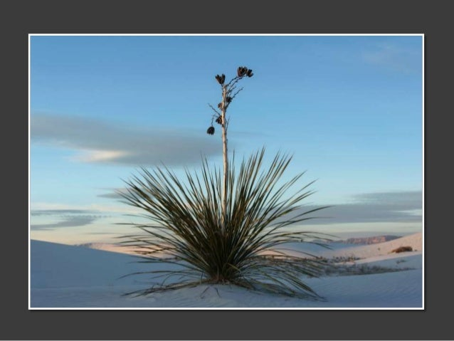 White Sands in Color - Images by Marjorie Kaufman Slide 3