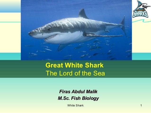 Great White SharkThe Lord of the Sea   Firas Abdul Malik   M.Sc. Fish Biology       White Shark      1
