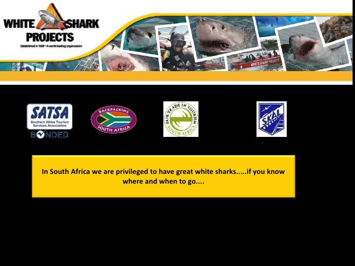 In South Africa we are privileged to have great white sharks.....if you know                         where and when to go....
