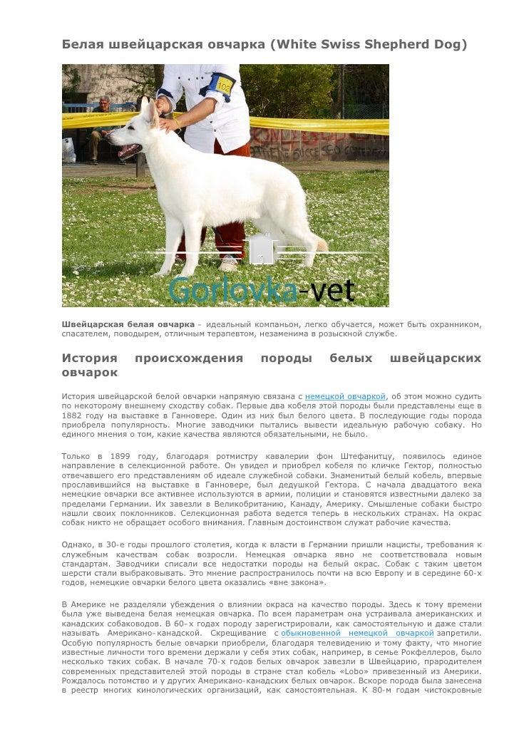 Белая швейцарская овчарка (White Swiss Shepherd Dog)Швейцарская белая овчарка – идеальный компаньон, легко обучается, може...