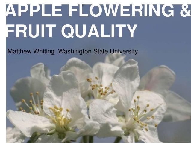 Matthew Whiting Washington State University APPLE FLOWERING & FRUIT QUALITY