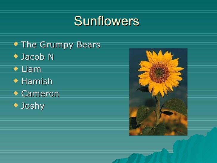 Sunflowers  <ul><li>The Grumpy Bears </li></ul><ul><li>Jacob N </li></ul><ul><li>Liam </li></ul><ul><li>Hamish </li></ul><...