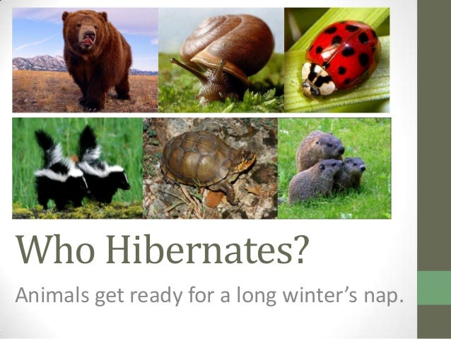 Who Hibernates?Animals get ready for a long winter's nap.