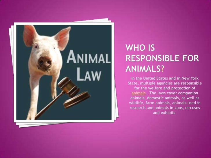 Who is responsible for animals?<br />In the United States and in New York State, multiple agencies are responsible for the...