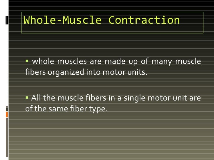 Whole-Muscle Contraction <ul><li>whole muscles are made up of many muscle fibers organized into motor units. </li></ul><ul...