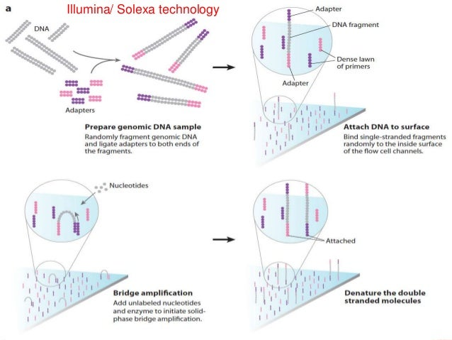 Whole genome sequencing of bacteria analysis selection of a technology for an experiment 12 ccuart Choice Image