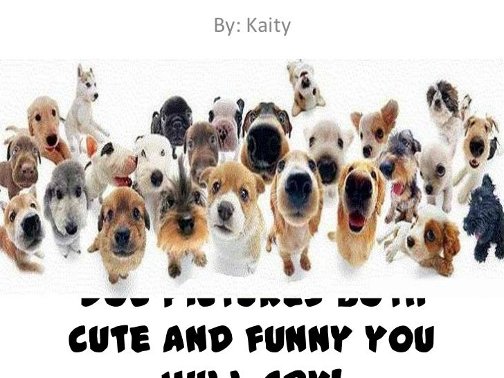 By: KaityDog pictures bothcute and funny you