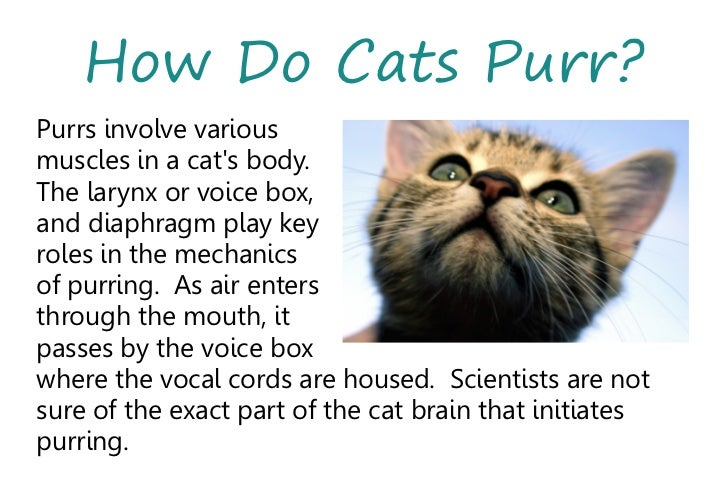 Why and how do cats purr?(Everyday Mysteries: Fun Science ...
